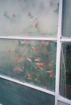 Joshua Whitelaw - #photography #abstract #florals