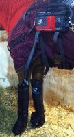 Hassinger Equine Sports Medicine Horse Therapy, Sports Medicine, Hunter Boots, Rubber Rain Boots, Cold, Hunting Boots
