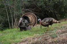 6 Turkey Hunting Tips You Should Know #turkeyhunting #waterfowlhuntingtips