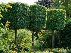 Arbre / Tree