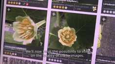 Inria - Pl@ntNet, the application that helps people identify plants
