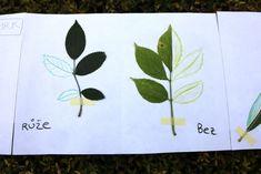 Listová leporela | Učíme venku Bee, Art For Toddlers, Leaves, Autumn Art, Manualidades, Autumn, Honey Bees, Bees