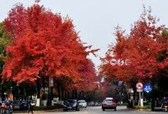 3 Days #Red Leaves Guilin Photo Tour is a nice subject of Guilin photo tour in late autumn or early winter.The red leaves scene is so beautiful and amazing against the unique landscape of Guilin. http://www.holidaychinatour.com/tour_view.asp?id=376