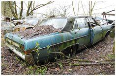 opel diplomat  | Opel Diplomat A - Kategorie: Oldtimer
