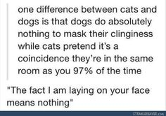 That is so true XD that reminds me of my kitty Benny, he is such a lap cat, but he wants us to think he is manly.. XD