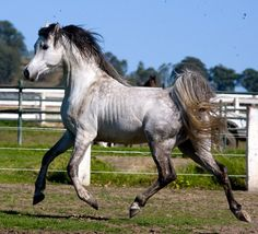 what a gorgeous horse [Woolf ERA]