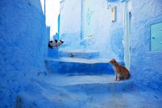 chefchaouen-in-morocco-1600x1066.jpg (1600×1066)