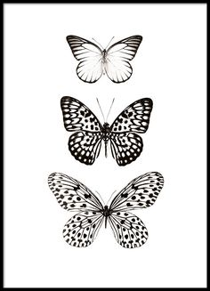 c5d9e3931 A stylish and cleanly designed Poster with three butterflies. You can find  more black and white prints in our webshop so that you can decorate your  home ...