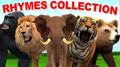 Finger Family Nursery Rhymes with Animal Cartoons | Wild Animal Cartoons...