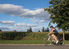 Under the Knife: Why an Urban Ottawa Farm Was Almost Carved Up for a Local Hospital - http://modernfarmer.com/2016/09/central-experimental-farm-ottawa/?utm_source=PN&utm_medium=Pinterest&utm_campaign=SNAP%2Bfrom%2BModern+Farmer