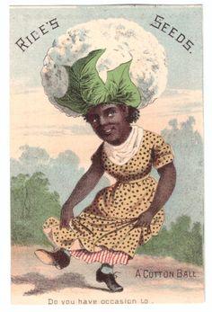 Semillas de arroz de tarjeta de comercio década de 1880 un Algodón Cambridge New York Negro tema | eBay