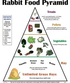 House Rabbit Society recommends a limited pellet diet for rabbits. Pellets should be the smallest part of a healthy rabbit's diet. The Rabbit Food Pyramid (pdf) is a good visual representatio… Bunny Cages, Rabbit Cages, House Rabbit, Rabbit Feeder, Meat Rabbits, Raising Rabbits, What To Feed Rabbits, Food For Rabbits, Vegetables For Rabbits
