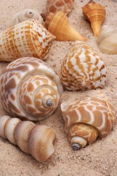 Sea shells in earth colors: