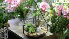 geometric  terrariums Terrarium Ideas, Glass Terrarium, Terrariums, Small Potted Plants, Air Plants, Indoor Plants, Ceramic Planters, Floating Frame, Classic Elegance