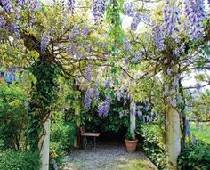 Photo about Patio garden with a pergola vined with Chinese Wisteria. Image of wisteria, picturesque, vine - 31332320 Hotel Rome, Chinese Wisteria, Pergola Attached To House, Pergola Swing, Pergola Designs, Pergola Ideas, Canopy, Fence, Flora