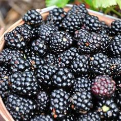 """P. Allen Smith on incorporating Small Fruits in the Garden """"Edge a raised bed with strawberries or plant a blueberry hedge. You can train blackberries and raspberries to grow up trellises and grapes will easily grow over an arbor."""""""