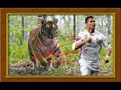 """CRISTIANO RONALDO chased by a Tiger! Exciting wall deco!     Great Wall deco in mint condition, signed with Cristiano Ronaldo's signature autograph with his lucky number """"7"""" at the end! 40x30 cm (15.75""""x11.81"""") Questions? SMS me: (+49-151) 2094-9859"""