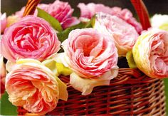 https://flic.kr/p/VQhDgz   Postcrossing DE-6251379   Beautiful postcard with a photo of a basket of roses, sent by a Postcrossing member in Germany.