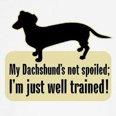 My Dachshund's not spoiled; I'm just well trained!