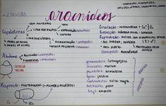 #aracnideos #biologia #resumo