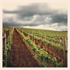 Erath Vineyards in Willamette Valley Wine Country in>> Thank you Erath for my casual wine drinking, I pick you up all the time