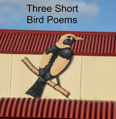 Three short bird poems. The poems are short, not the birds!