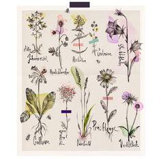 Image result for veronica ballart lilja
