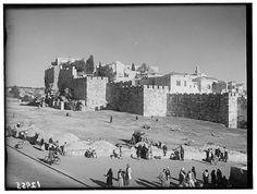 Jerusalem-القدس الشريف: صورة للجهة الشمالية من سور المدينة غضون موسم البرتقال. (1940-1946)