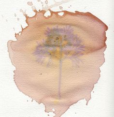 Anthotype made with red wine by Lenny, via Flickr