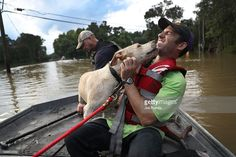 Mark Buchert from the Louisiana State Animal Response Team gets a lick from a dog he helped rescue from flood waters on August 15, 2016 in Baton Rouge, Louisiana. Record-breaking rains pelted Louisiana over the weekend leaving the city with historic levels of flooding that have caused at least seven deaths and damaged thousands of homes.