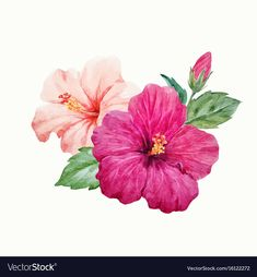 Watercolor tropical hibiscus flower vector image on VectorStock Hibiscus Drawing, Hibiscus Tattoo, Canvas Painting Designs, Easy Canvas Painting, Hibiscus Flowers, Tropical Flowers, Flower Images, Flower Art, Tatoo