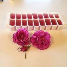 Frys ned rosevannet, så har du tilgang hele vinteren! Rose, Pink, Roses, Pink Roses