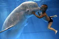 3 Year Old Boy Kisses Beluga Whale Underwater