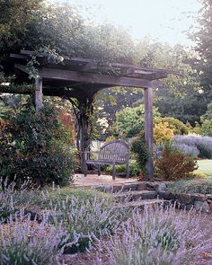 """""""Madame Alfred Carriere"""" roses grow on the arbor near the lavender garden."""