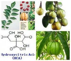 Hydroxycitric_Acid_HCA_Garcinia Cambogi