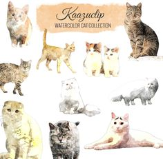 Watercolor Cat Collection-10 pieces - is a collection of my Watercolor sets! 10 piece clipart set for personal and commercial use includes all colors seen, perfect for scrapbooking, greeting
