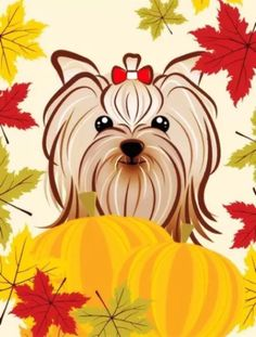 Happy Fall..  #yorkshireterrier