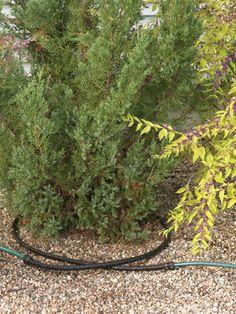 Landscape Drip Irrigation System | Snip-n-Drip | Gardener's Supply