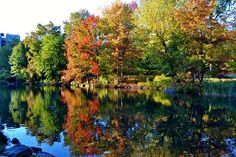 The Pool. By Gigi Altarejos. #fallfoliage #centralpark