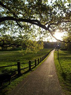 Avondlicht, Park Sonsbeek, Arnhem, Gelderland.