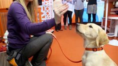 Animal Planet's Andrea Arden stopped by Studio 1A Wednesday with a few tips and tricks for how to train your pooch.  On hand to...