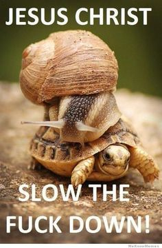slow-the-fuck-down