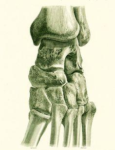 1897 Squelette du Tarse Os duPied Péronné Planche Originale P. Tillaux Anatomie Chirurgie