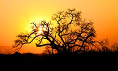 AFRICAN SUN BY JAMIE HODGSON