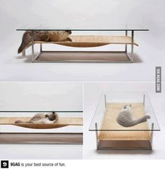 The latest mews in coffee table design