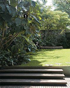No canteiro, se destacam as folhas grandes da macaranga (1). O tronco, comprado em antiquário, serve de banco. Ao lado do móvel e no detalhe, veja o colorido da capota-vermelha (2).