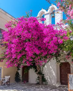 """ValantisM's Instagram post: """"Paros 🔥🔥 🔥 Blooming alleys of Paros 😍From 1 to 7 which is your favourite shots from this divine island 😍😍don't forget to check 👉…"""" Greek Islands, Cool Photos, Amazing Photos, Scenery, Shots, Bloom, House Styles, Instagram Posts, Paros Greece"""