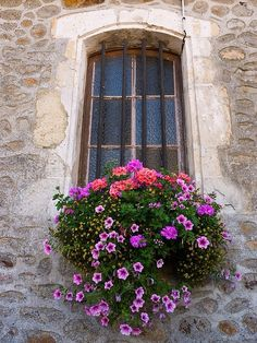 Pretty window box with flowers