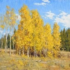 A Stand of Aspens