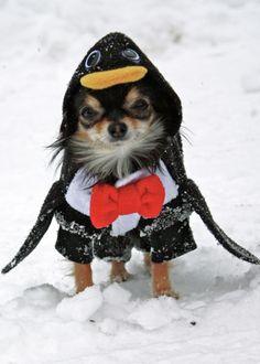 Me siento como pinguino ¿porqué será?